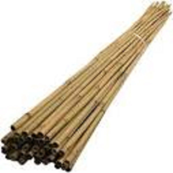 Picture of 8FT BAMBOO CANE 12-14MM