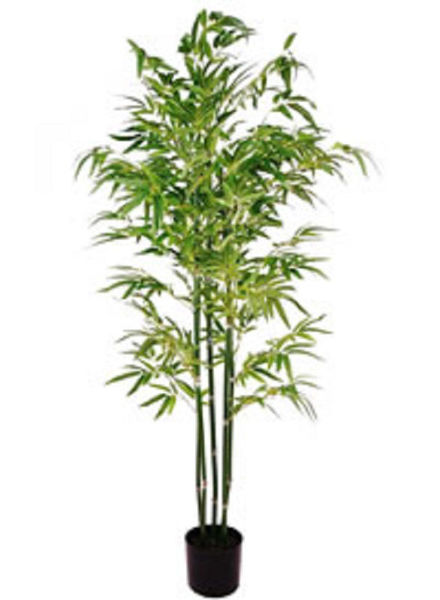 Picture of ARTIFICIAL BAMBOO TREE - 4FT