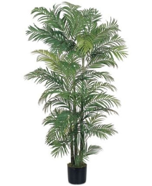 Picture of ARECA PALM TREE GREEN IN PLASTIC POT