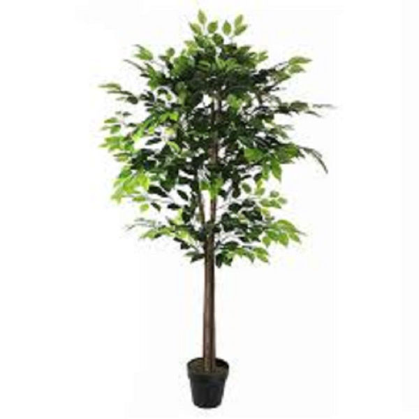 Picture of ARTIFICIAL FICUS IN POT